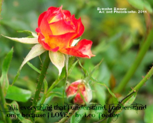 rose-tolstoy-quote-with-tag