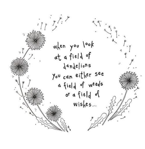 dandelion quote