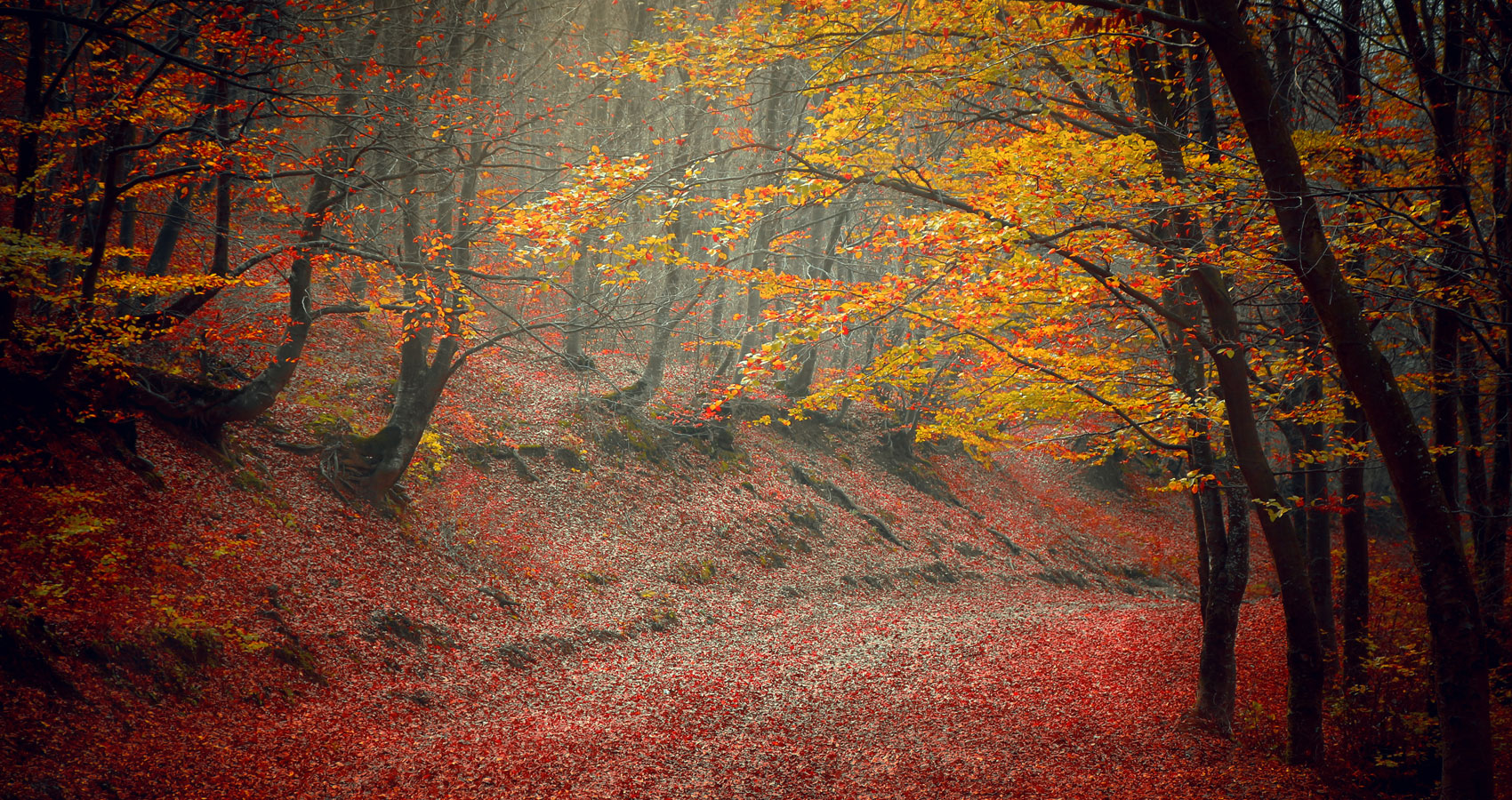 For-A-Land-Of-Autumns-spillwords